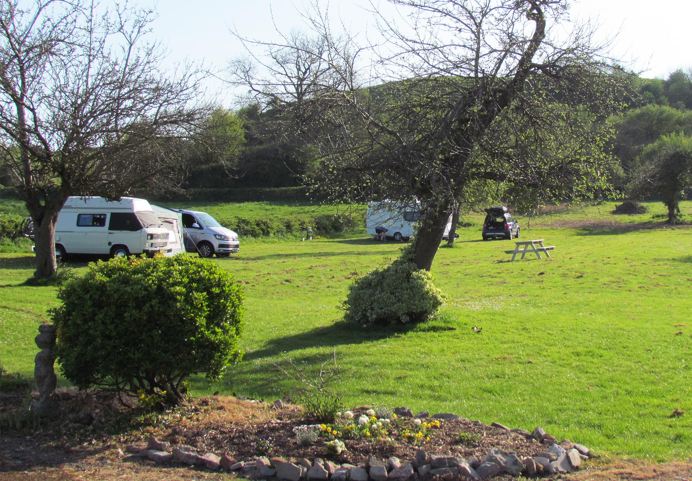 LEAN TREE IN FIELD